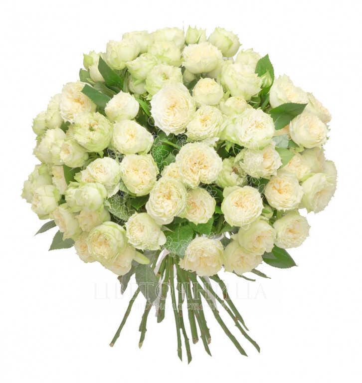 Заказать Букет «Первосортные белые розы»