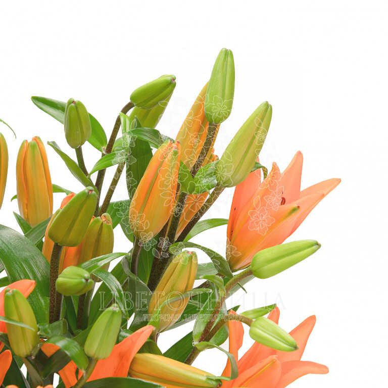 Доставить Букет «Оранжевое лето»
