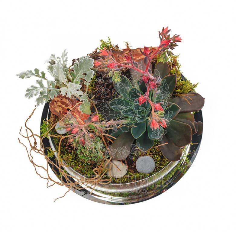 Заказать Горшечное растение «Садик в стекле»