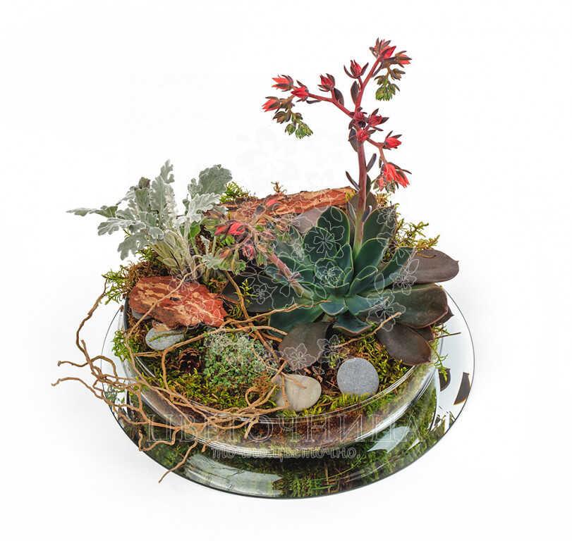 Доставить Горшечное растение «Садик в стекле»