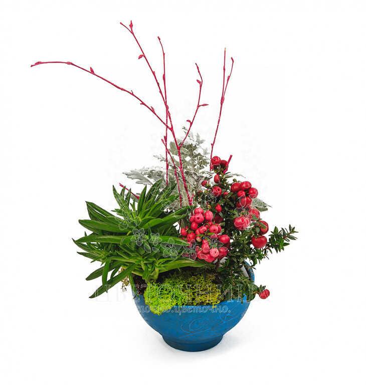 Заказать Горшечное растение «Ягодная поляна»