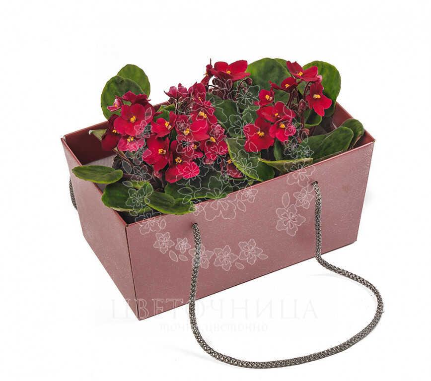 Заказать Горшечное растение «Фиалка - сказочный цветок»