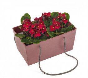 Горшечное растение «Фиалка - сказочный цветок»